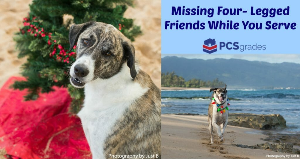 Missing Four-Legged Friends While You Serve