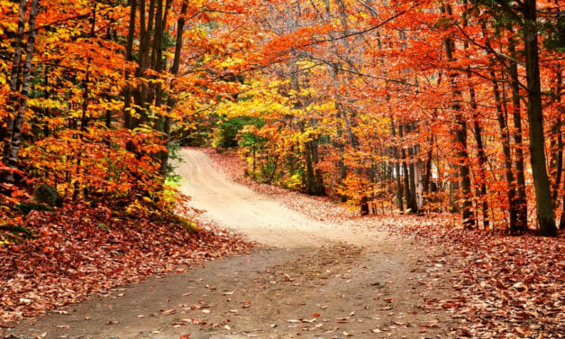 Four Affordable Fall Getaways for Military Families