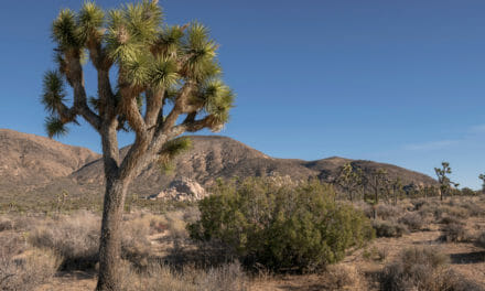 Your Twentynine Palms Area Guide
