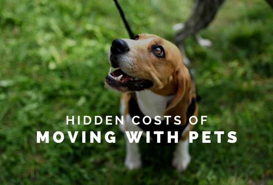 Help with the Costs of Moving with Pets
