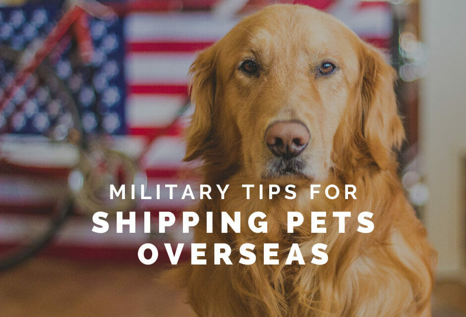 Tips for Shipping a Pet Overseas